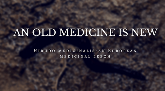 Hirudo medicinalis – An Old Medicine is New.