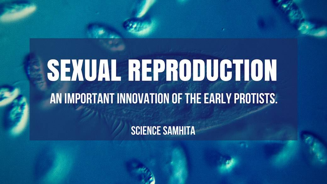 Sexual Reproduction In Protists - An Important Innovation of the Early  Protists.