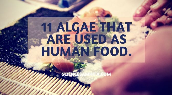 11 Algae that are Used as Human Food.