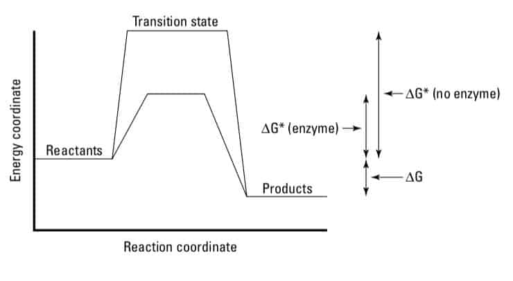 Activation_Energy_In_Reaction