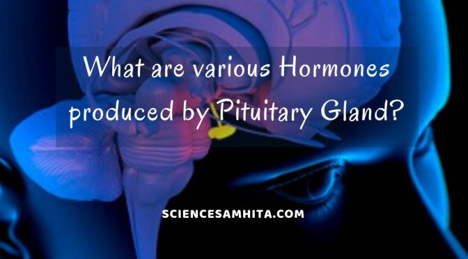 hormones_secreted_by_pituitary_gland