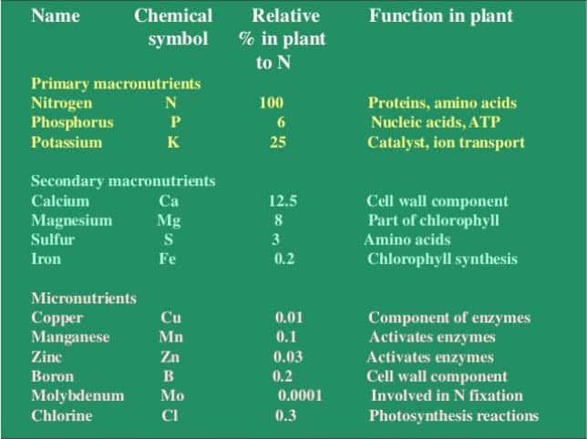 mineral_nutrients_in_plants